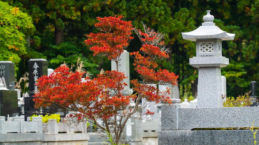 Yudanaka2-66.jpg